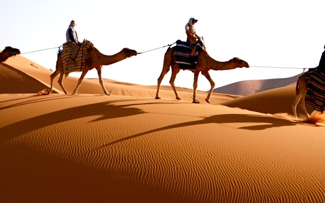 Marrocos camelo.jpg